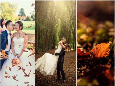 20 photos «day-after» : les merveilles de la forêt en automne
