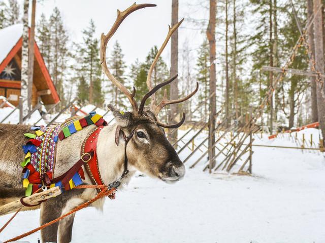 Lune de miel au pays du Père Noël : en route pour la Laponie !