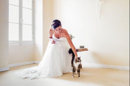 Mon chat avec moi : 6 bonnes raisons de l'avoir près de vous le jour J