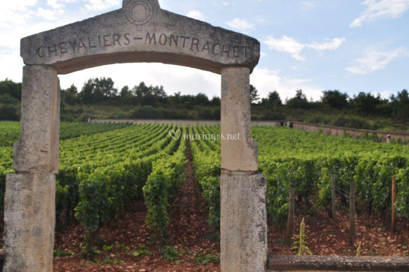 Partagez votre passion du vin