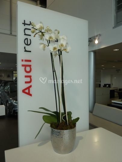 Audi-Rent -Auto-Concept
