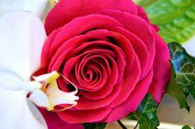 Carré Roses