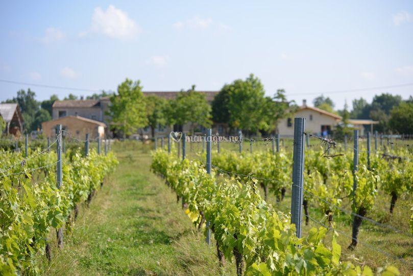 Le domaine et sa vigne