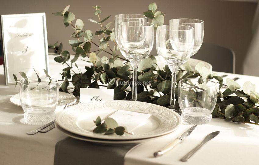 Table eucalyptus