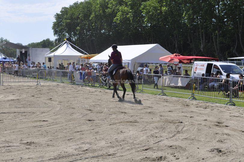 Concour equestres