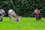 Les ânes et joli cœur