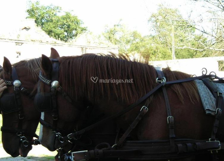 Un mariage avec des chevaux