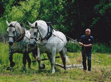 Beaux chevaux
