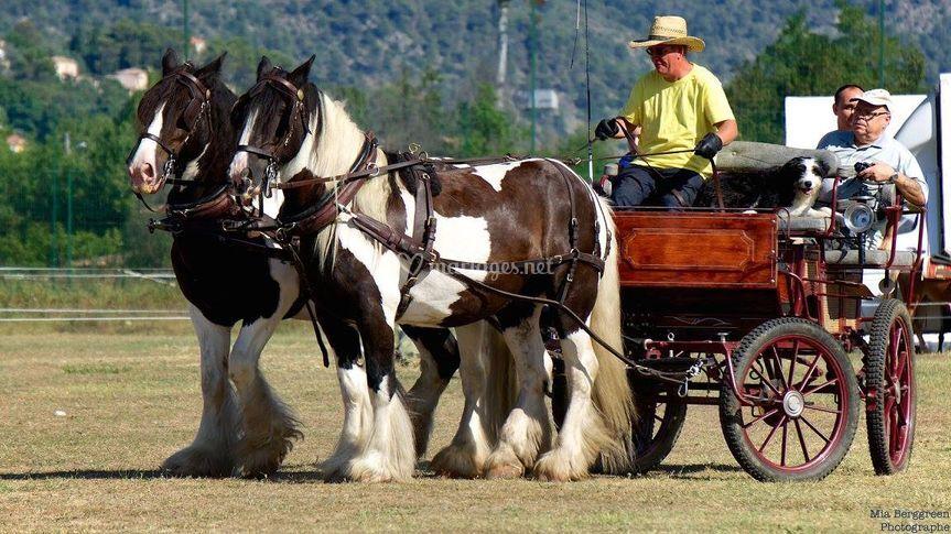 Ferme Equestre La Teulerie