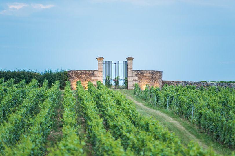 Les vignes du Château.