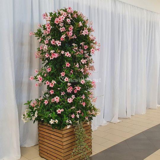 Location de décor floral