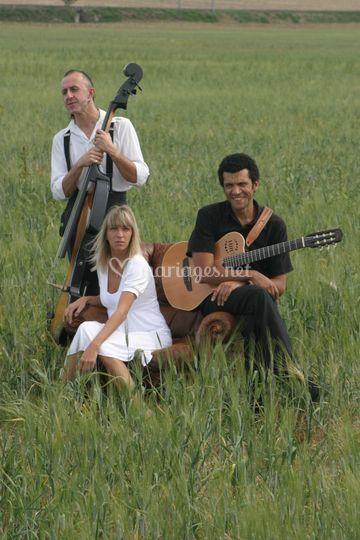 Lilas cicus trio