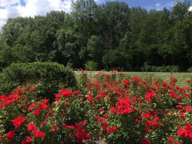 Parc et fleurs