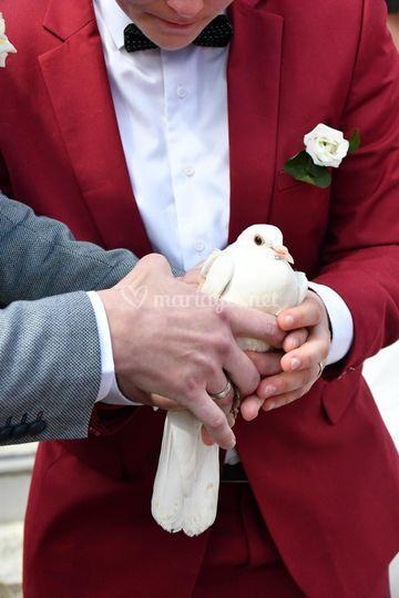 Lancer de colombes