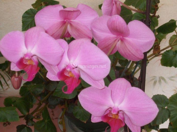 Une orchidée