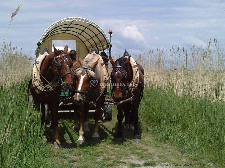 Chariot Bâché