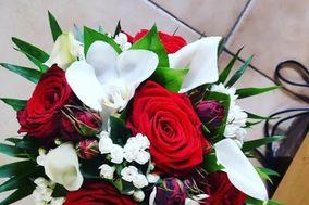 Florilys