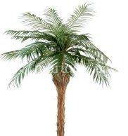 Location arbres exotiques