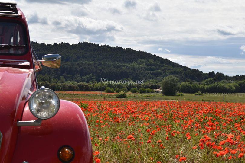 Bertille en Provence