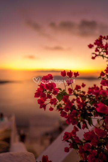 Décoration fleurs sunset