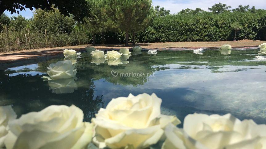 Roses flottantes