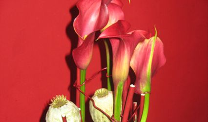 L'Arbre à Fleurs