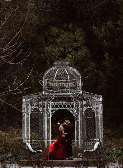 Clair de Lune Photo & Vidéo