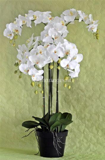 Location orchidée décorative