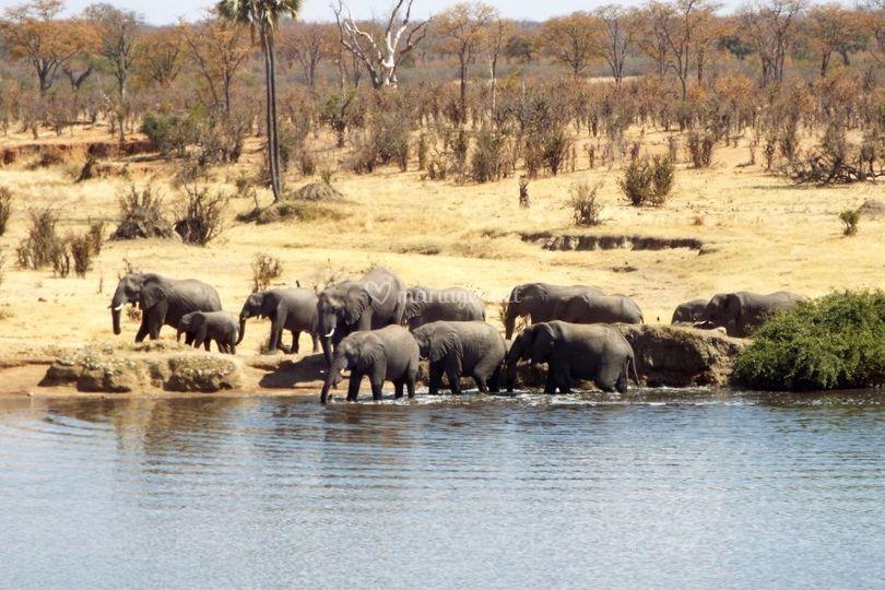 Afrique - safari