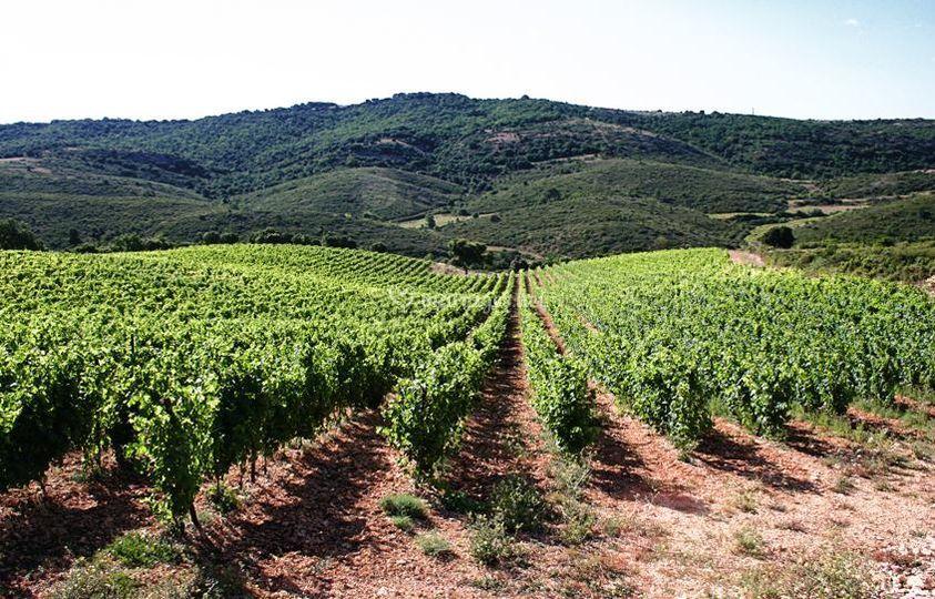Collines de vignes