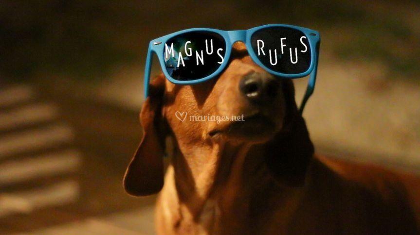 Magnus Dog