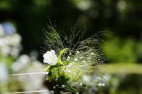 Fleurs de Versailles