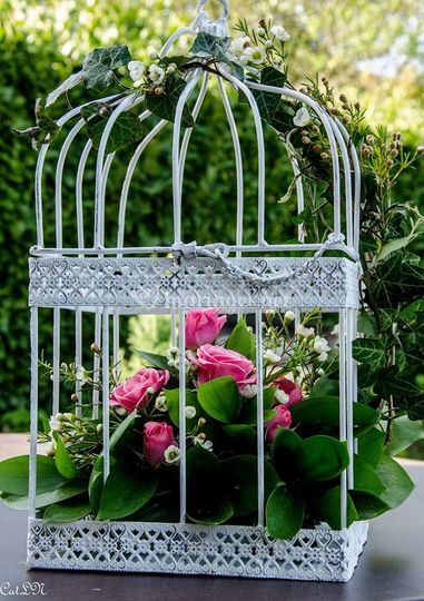 Jolie cage