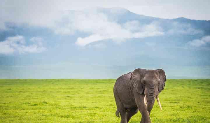 Safari en Tanzanie