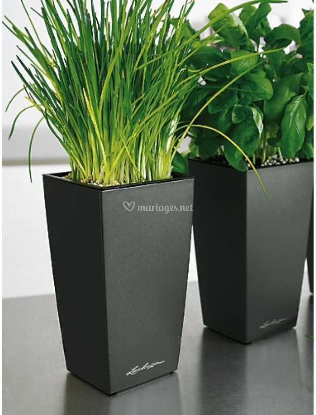 Plantes en location