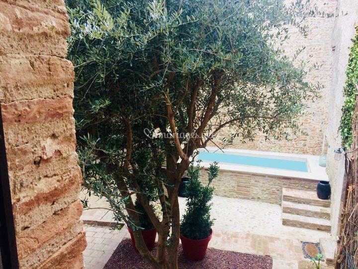 La piscine sous l'olivier