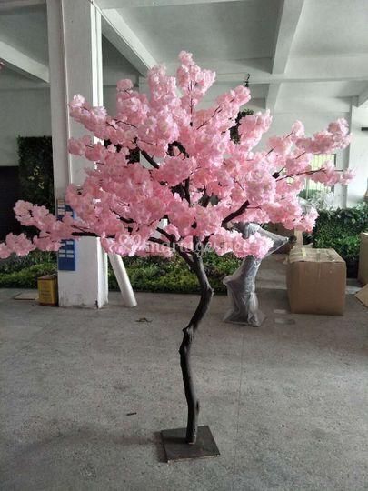 Cerisier en fleur 2 mètres