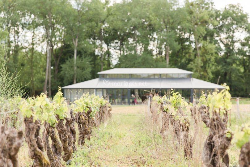 Le Pavillon vu des vignes