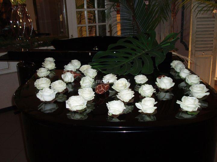 Partition de roses blanches
