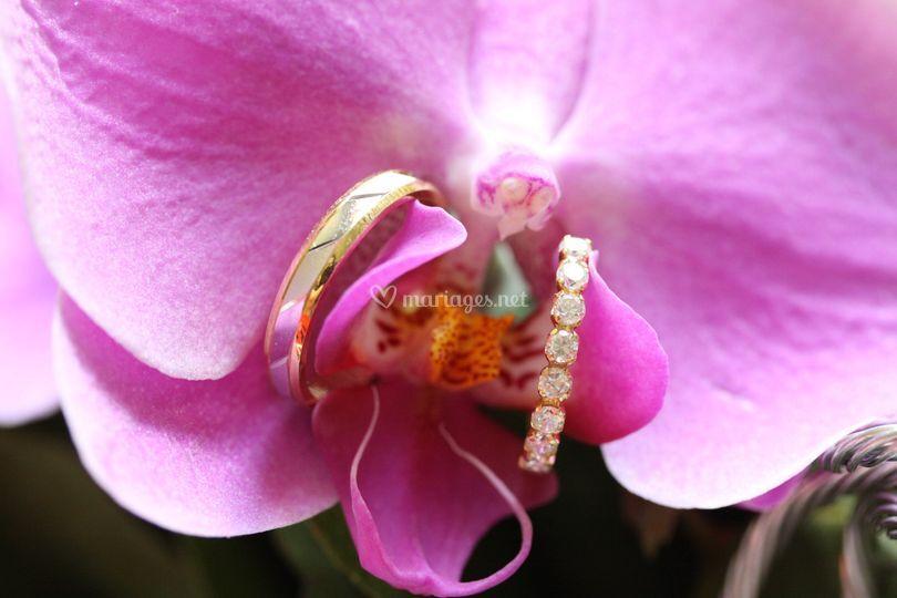 Les alliances dans l'orchidée