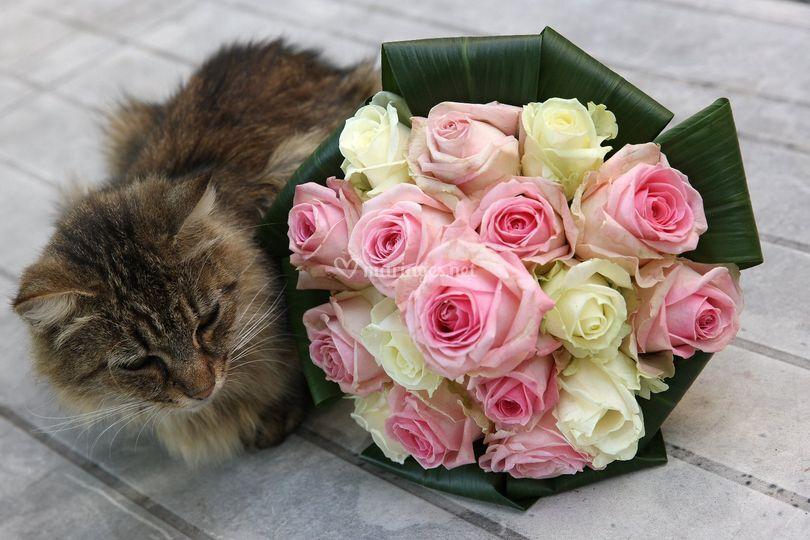Bouquet et petit chat