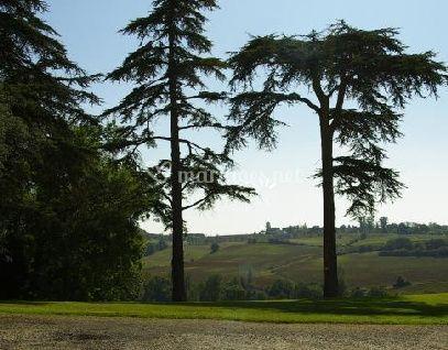 Les arbres de la propriété