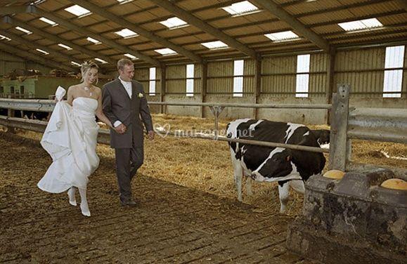 Hegy Jean-Marc© vache