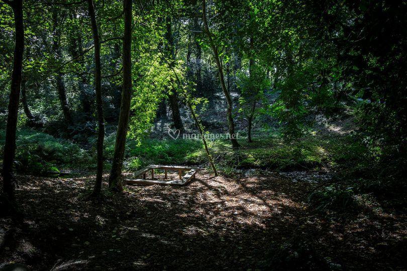 La forêt de Kéroual
