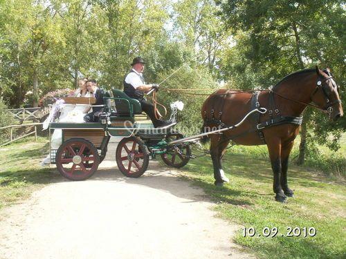 Photo mariés dans Parc