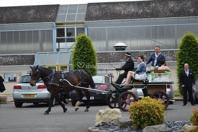 Elevage Cob Normand des Roches
