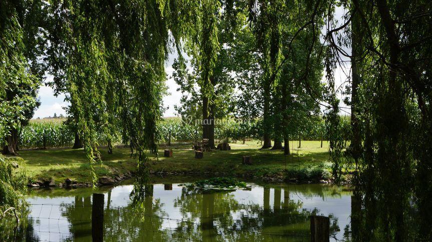 Tons de verts sur l'étang