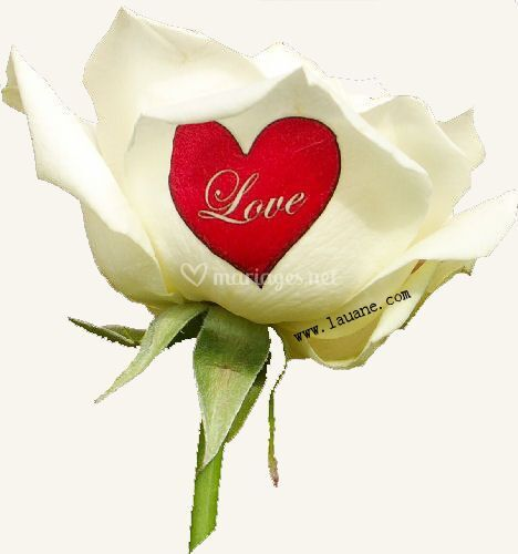 Rose naturelle imprimée