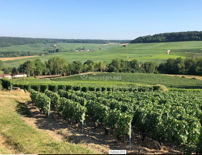 Domaine de Romery en Champagne