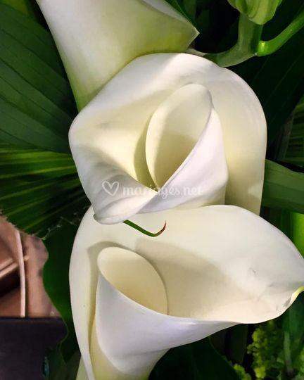 Fleurs écrin pour alliances